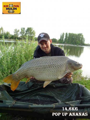14,6kg, zig rig - pop up Ananas