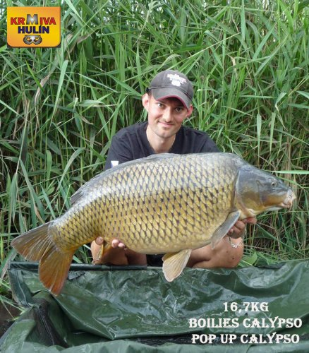 16,7kg, boilies Calypso, pop up Calypso
