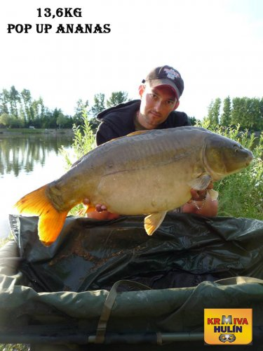 13,6kg, zig rig - pop up Ananas