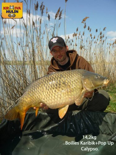 14,2kg, boilies Karibik, pop up Calypso