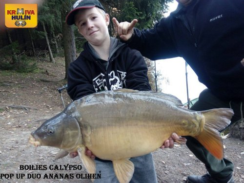 Boilies Calypso, pop up Ananas/Oliheň