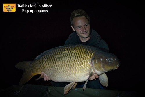Boilies krill/oliheň, pop up ananas