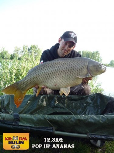 12,3kg, zig rig - pop up Ananas
