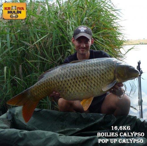 16,6kg, boilies Calypso, pop up Calypso